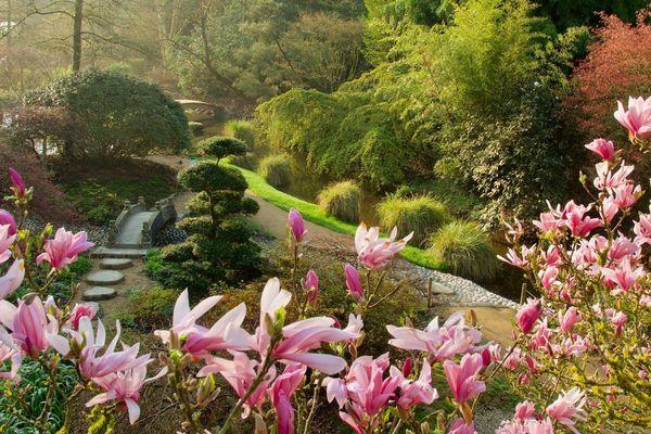 Les jardins du Parc botanique de Haute-Bretagne sont magnifiques en ce mois d'avril 2020, mais personne ne peut les voir