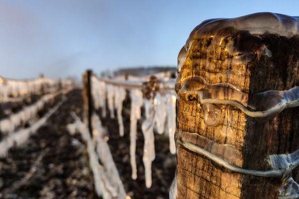 Le gel dans les vignes de l'Aube.