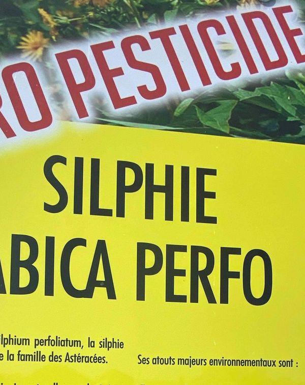 Zéro pesticide et peu d'eau, la silphie est appréciée des insectes pollinisateurs et de Dame nature
