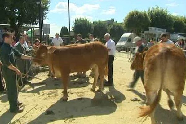 Le marché aux bestiaux compte une centaine de bêtes à vendre cette année.