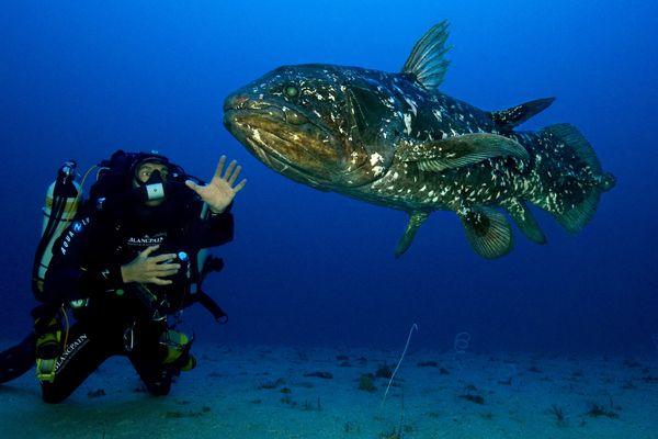 Image d'illustration extraite du film Le Coelacanthe, plongée vers nos origines