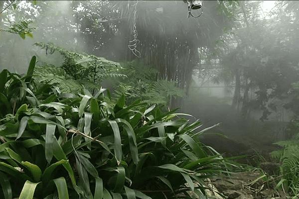 Du brouillard artificiel dans les serres tropicales du conservatoire botanique de Brest
