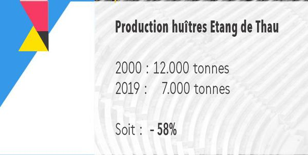 - 58% d'huîtres sur l'Etang de Thau en 20 ans.