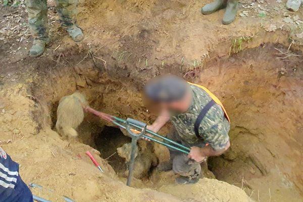 Des bénévoles de l'association de défense des animaux One Voice ont infiltré un équipage de veneurs sous terre des Hauts-de-France en train de tuer des renardeaux.