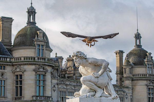 Après le passage de la buse Twitter, plus aucun pigeons n'osent s'approcher des toits du château de Chantilly
