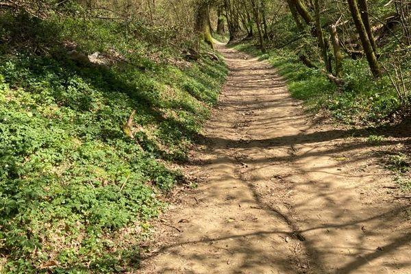 La boucle des Tollières à Neuville-sur-Saône vous offre une balade dans un espace naturel sensible.