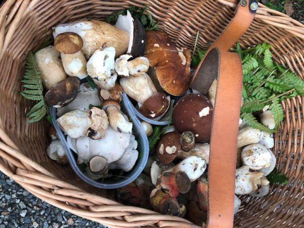 Le panier en osier idéal pour transporter les champignons ramassés.