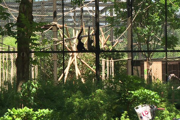 La forêt asiatique s'ouvre au parc de la tête d'or le 7 juillet 2021