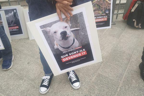 Les manifestants réclament la saisie des animaux qui sont toujours au refuge du Revest-les-Roches dans les Alpes-Maritimes.