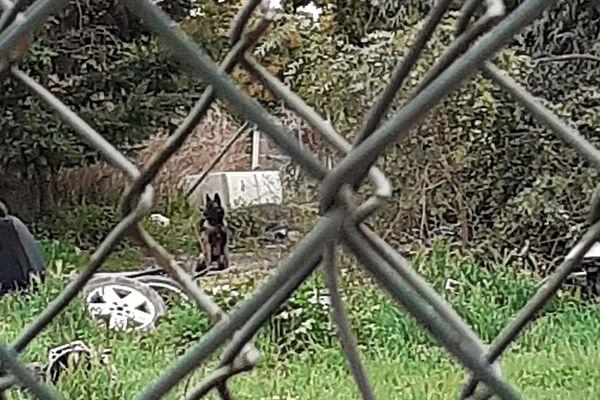 Un chien enfermé et attaché délaissé par son propriétaire et nourri par le voisinage dans les Pyrénées-Orientales.