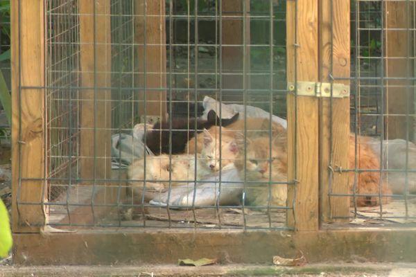 Une quarantaine de chats découverts dans une maison insalubre à Besançon ainsi qu'une trentaine de cadavres de chats qui étaient congelés.