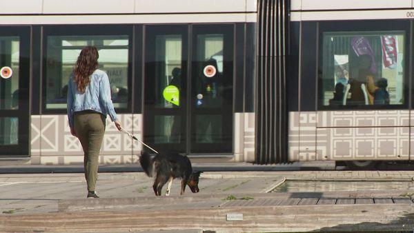Pauline Bobée qui n' a pas de voiture souhaite pouvoir se déplacer avec son chien dans le tram du Havre.