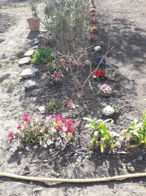 Marie-Noël a pu planter à nouveau des fleurs dans son jardins détruit par la tempête Alex