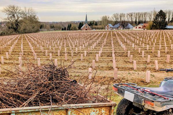 Parcelle de vignes de la société de négoce Ternoveo