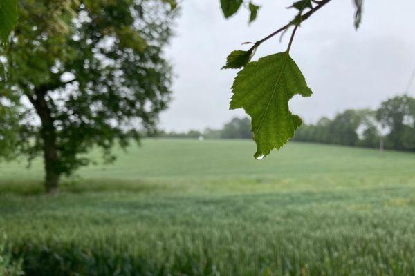 Météo  : mai froid et humide