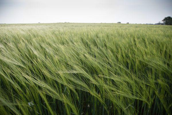 le vent dans un champ de blé, chacun trouve l'image mental qui lui déclenche le plus d'émotion positive