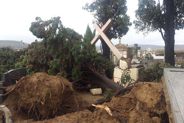 Des arbres déracinés dans le cimetière d'Adissan
