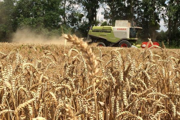 Les récoltes 2018 s'annoncent moyennes pour les céréales.