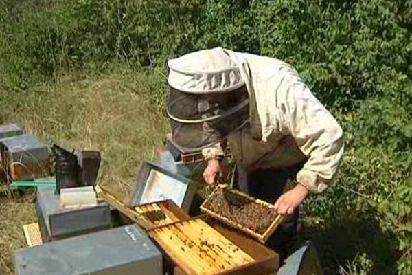 Cet apiculteur de Ludesse (63) a perdu 700 000 abeilles en une seule nuit. 12 ruches ont été volées.