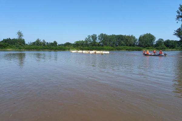 Les pompiers de l'Aisne et de l'Oise ont récupéré des centaines d'animaux coincés dans des champs inondés dans l'Aisne.