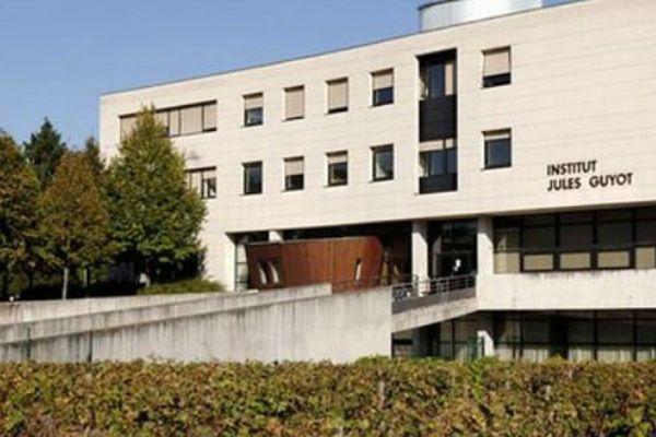 L'IUVV a planté des pieds de vignes devant le bâtiment situé sur le campus
