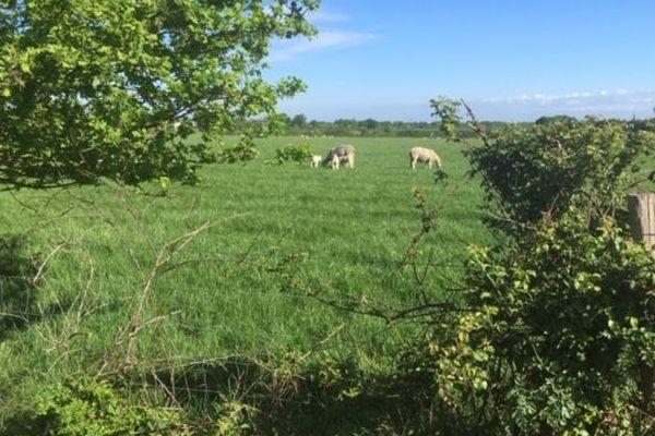 Trois brebis ont été volées en plein week-end de Pâques sur cette exploitation de Trans-sur-Erdre.