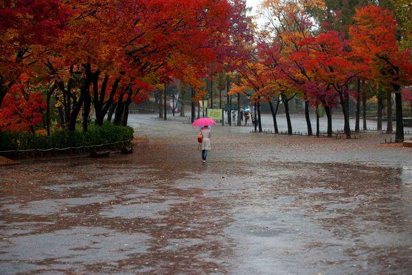 L'automne dans sa splendeur