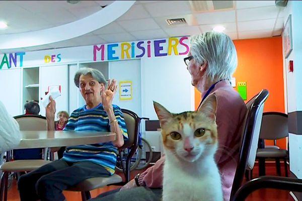 Deux chats à l'EHPAD de Périgueux pour aider les résidents