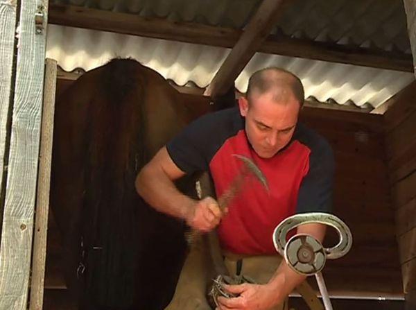 Derniers ajustement des fers par le maréchal-ferrant avant le départ des courses
