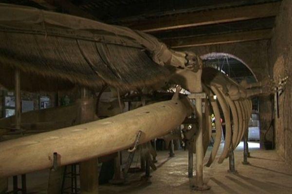 La baleine de Jean-louis Fabre est installée dans un chai