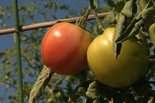 Depuis cet hiver, les bouillarguais peuvent se doter d'une parcelle de jardin pour y cultiver fruits et légumes.