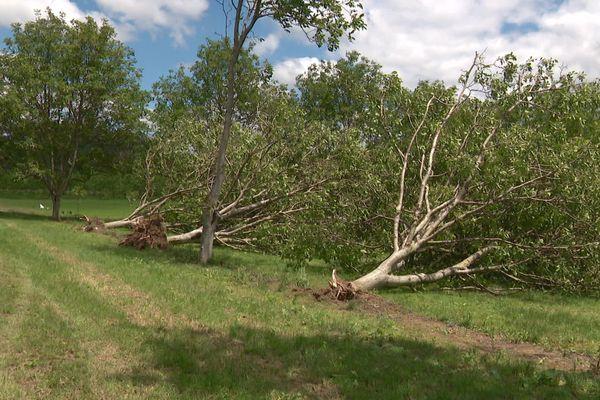 Les dégâts causés par l'épisode de grêle qui s'est abattu sur la région le samedi 15 juin... des récoltes de fruits perdues et des arbres arrachés.