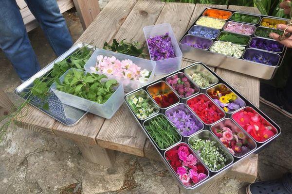 Plantes sauvages et fleurs colorées comestibles cueillis dans la montagne noire par Josette pour le chef Thomas Cabrol