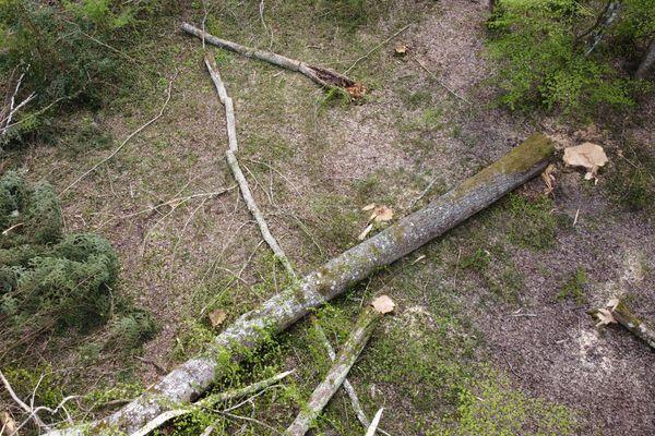 Les arbres abattus dans le parc de la Sauque ( l'abattage a eu lieu du 1er au 3 avril 2020 )