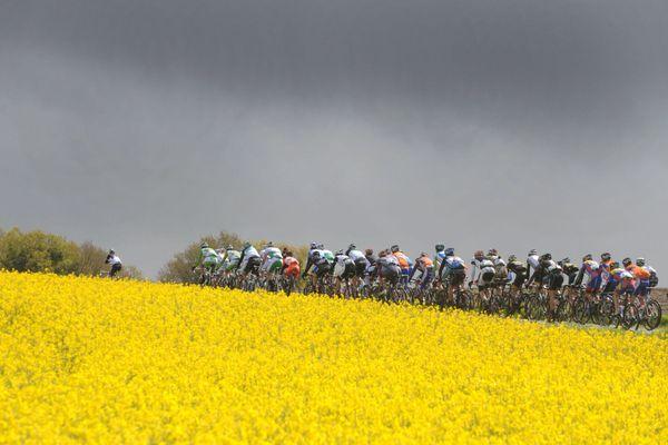 Champs de colza sur le parcours du Tour de Bretagne qui fait son retour ce 20 septembre 2021 sur France 3 Bretagne / © Thomas BREGARDIS / Maxppp