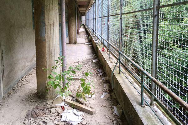 La nature a repris ses droits dans l'hôpital abandonné