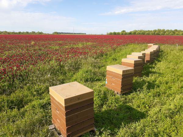 Val de Loire, Petite Beauce ou Sologne, une forte diversité florale pour l'apiculteur