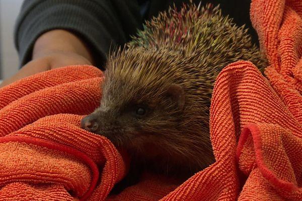 Hegalaldia a soigné de nombreux animaux du quotidien pendant le confinement.