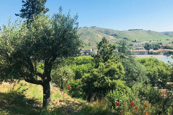 Le jardin d'Eden, à Tournon sur Rhône, un hectare de verdure et de nature... et une douce ascension à travers des terrasses arborées.