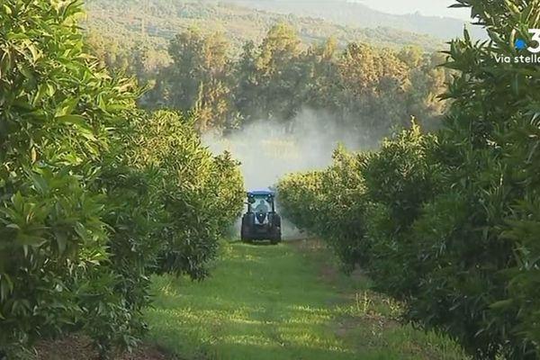 Le premier arrêté anti-pesticide de Corse a été pris à Barretalli.