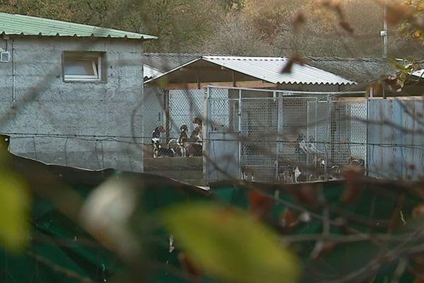 Depuis 1974, l'élevage de Mézilles fournit des chiens aux laboratoires.