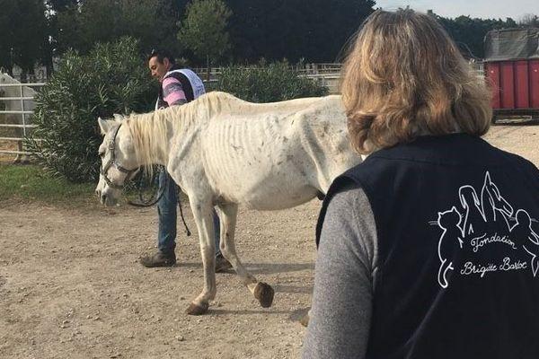 Les chevaux en souffrance sont pris en charge dans la structure de la fondation.