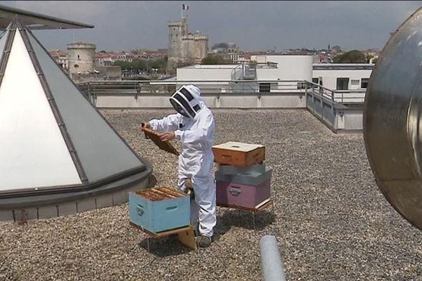 Les ruches de Julien Dosnon