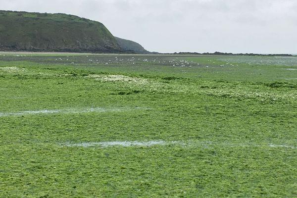 Les algues recouvrent la plage de Saint Maurice