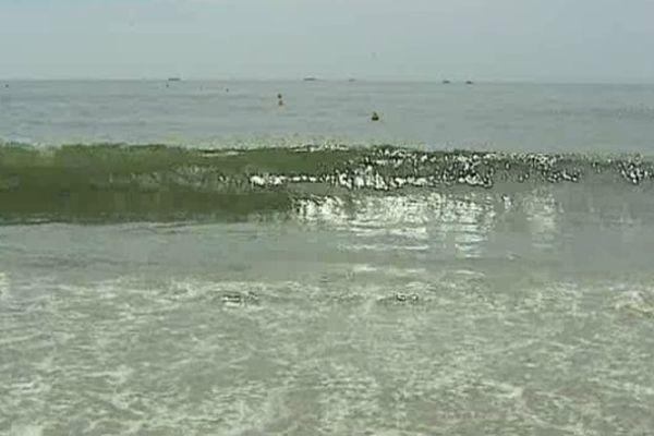 Les phyto planctons apportent une couleur verte à la mer dans l'Estuaire.