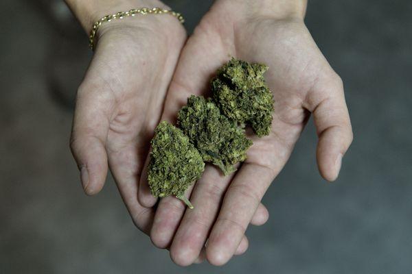 La plante de chanvre contient plus de 80 cannabinoïdes, dont le tétrahydrocannabinol (THC), qui est responsable des effets psychoactifs du cannabis, et le cannabidiol (CBD), une substance non-psychoactive qui permet d'être consommée sans effet secondaire.