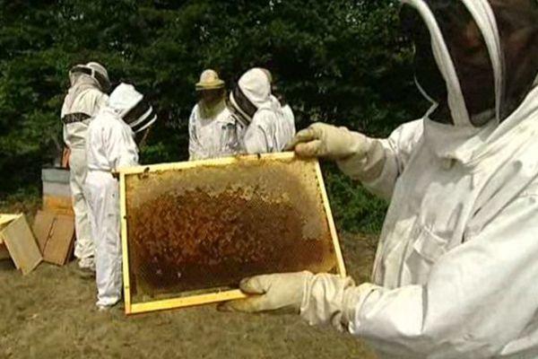 Les solutions proposées par les apiculteurs diffèrent