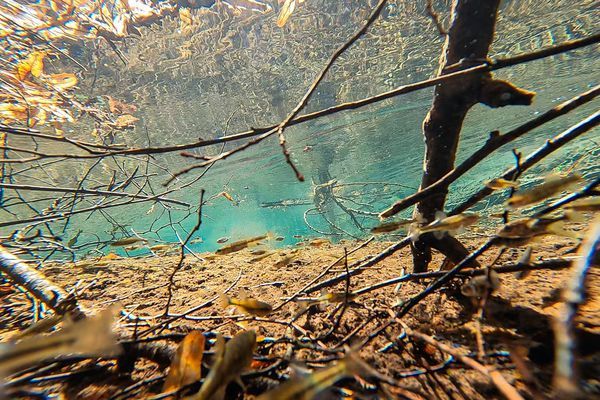 De nombreuses espèces vivent dans cette eau fraîche et limpide