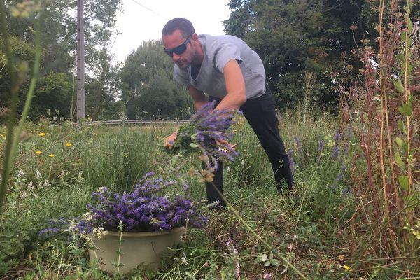 Bertrand Rosey en train de cueillir de l'hysope dans son champ de plantes aromatiques.