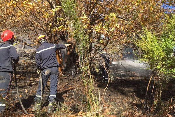 27/11/2017 - Un incendie parcourt 3 hectares de maquis à Sant'Andrea-di-Cotone (Haute-Corse)